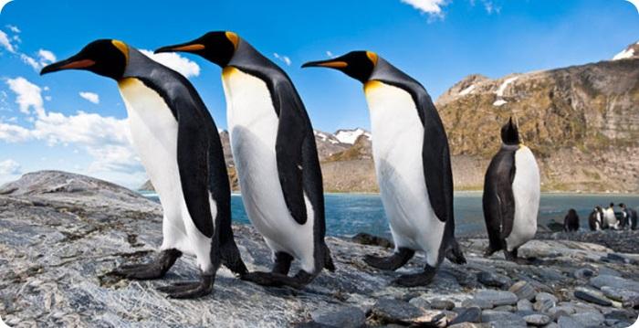 Фото пингвинов