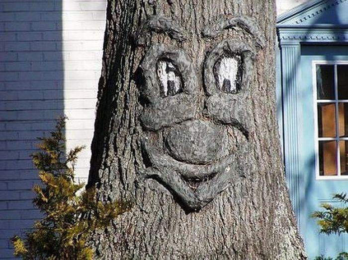 дерево за которым будут прятаться евреи видео интересно организовать