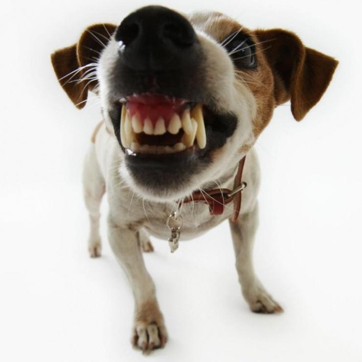 Как защищаться от собак