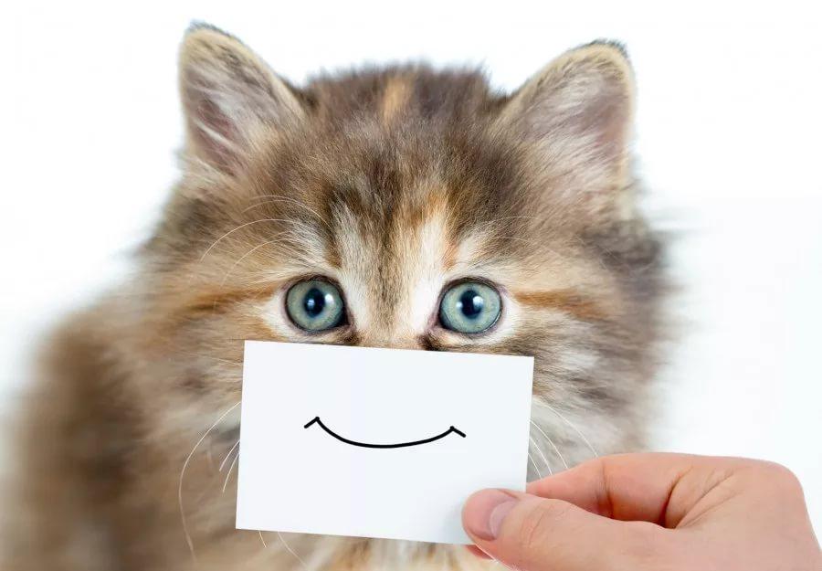 Котики с улыбкой