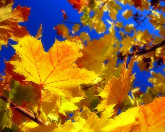 В воздухе витает осень