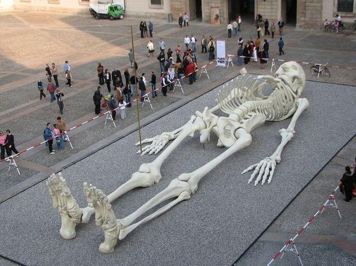 скелеты фото смотреть бес