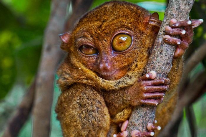 По ссылке самые странные животные в мире